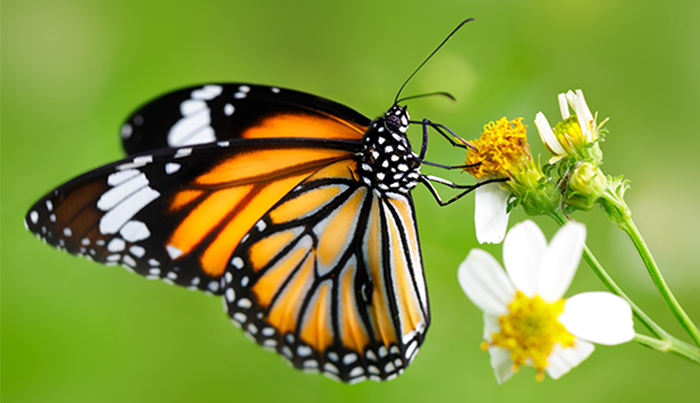 butterfly_earth_day