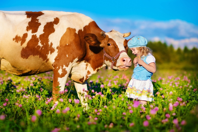 Dairy Product Standards - Child with Cow